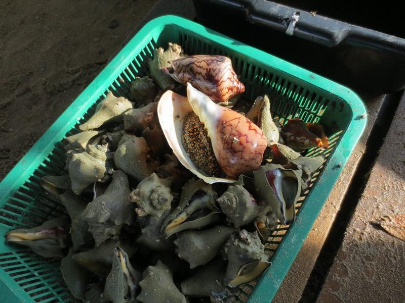 Skaldjur och fisk
